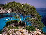 Sabina Tree Dominating Cala Macarelleta  Southern Coast  Menorca  Balearic Islands  Spain
