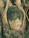 Head of Buddha Statue Overgrown with Tree Roots  Wat Phra Mahathat  Ayuthaya (Ayutthaya)  Thailand