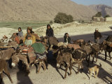 Migration of the Qashgai Tribe  Iran  Middle East