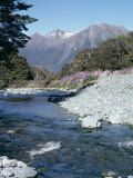 Cascade Creek and Stuart Mountains  South Island  New Zealand