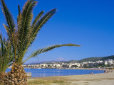 Palm Tree and Rethymo Beach  Rethymno (Rethymnon)  Island of Crete  Greece  Mediterranean