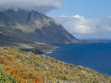Flowers and Mountains on the Southern Coast  El Hierro  Canary Islands  Spain  Atlantic