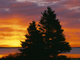 Silhouette of a Spruce Tree at Sunrise  Kouchibouguac National Park  New Brunswick  Canada