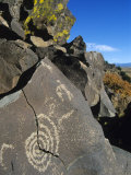Petroglyphs  Santa Fe County  New Mexico  USA