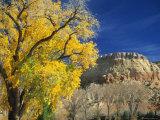 Cottonwood  Rio Arriba County  New Mexico  USA