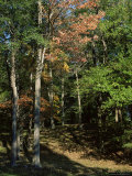 Woods in Autumn  Hudson Valley  New York State  USA