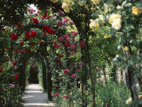 Arches Covered with Roses  Generalife Gardens  Alhambra  Granada