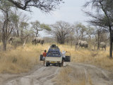 Tourist Standing by Car Watching Elephants Cross Road  Chobe National Park  Botswana  Africa