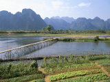 Bamboo Bridge  Vang Vieng  Laos  Indochina  Southeast Asia