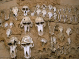 Monkey Skulls Embedded in Mud Wall to Protect Against Evil Spirits  Dogon Village of Telle  Africa