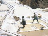 Inca Salt Pans Below Salt Spring  Salineras De Maras  Sacred Valley  Cuzco Region (Urabamba)  Peru