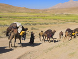 Kuchie Nomad Camel Train  Between Chakhcharan and Jam  Afghanistan