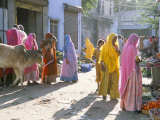 Typical Coloured Rajasthani Saris  Pushkar  Rajasthan  India