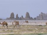 Tufa Towers at Lac Abhe  Afar Triangle  Djibouti