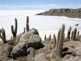 Cacti on Isla De Los Pescadores  and Salt Flats  Salar De Uyuni  Southwest Highlands  Bolivia