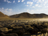 Flock of Sheep Between Maimana and Mazar-I-Sharif  Afghanistan