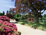 Path on Bank of Ten Foot Pond  Sheffield Park Garden  East Sussex  England  United Kingdom