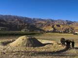 Boy Threshing with Oxen  Bamiyan Province  Afghanistan