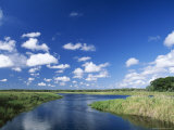 View from Riverbank of White Clouds and Blue Sky  Myakka River State Park  Near Sarasota  USA
