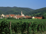 View to Village from Vineyards  Riquewihr  Haut-Rhin  Alsace  France