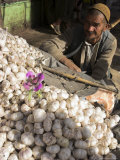 Man Selling Garlic  Bazaar  Central Kabul  Afghanistan