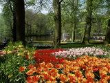 Tulips  Keukenhof Gardens  Lisse  Holland