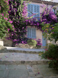 Village House Covered with Bougainvillea  Grimaud  Var  Cote d'Azur  Provence  France