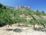 Almond Trees in the Sierra De Aitana  Alicante Area  Valencia  Spain