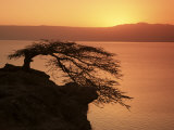 Acacia Tree Silhouetted Against Lake at Sunrise  Lake Langano  Ethiopia  Africa