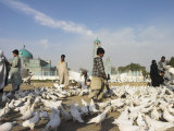 Street Boy Walks Amongst Famous White Pigeons  Shrine of Hazrat Ali  Mazar-I-Sharif  Afghanistan
