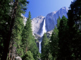 Upper and Lower Yosemite Falls  Swollen by Summer Snowmelt  Yosemite National Park  California
