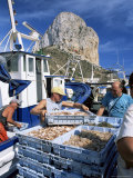 Fish Being Landed  Calpe  the Penyal d'Ifach Towering Above the Harbour  Alicante  Valencia  Spain
