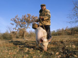 Truffle Producer with Pig Searching for Truffles in January  Quercy Region  France