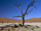 Dead Vlei  Sossusvlei Dune Field  Namib-Naukluft Park  Namib Desert  Namibia  Africa