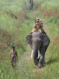 Game Guards Patrolling on Elephant Back  Kaziranga National Park  Assam State  India