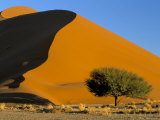 Sand Dune  Sossusvlei Dune Field  Namib-Naukluft Park  Namib Desert  Namibia  Africa