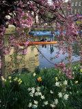 Punting in Spring  Cambridge  Cambridgeshire  England  United Kingdom