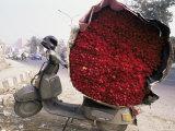 Flower Market  Lado Sarai  Delhi  India