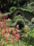 Abbey Gardens  Tresco  Isles of Scilly  United Kingdom