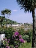 Palm Trees  Plockton at the Mouth of Loch Carron  Highlands  Scotland  United Kingdom