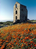 Disused Tin Mine Building Near Zennor  Cornwall  England  United Kingdom