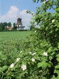 Egeskov Mill  Funen  Denmark  Scandinavia