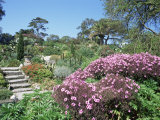 Abbey Gardens  Tresco  Scilly Isles  United Kingdom