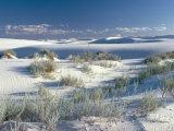 White Sands Desert  New Mexico  USA