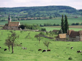 Farms Near Vieux-Pont-En-Ange  Near Boissey  Basse Normandie (Normandy)  France