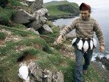 Puffin Catcher  Faroe Islands (Faeroes)  Denmark  North Atlantic