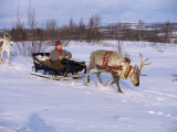 Southern Lapp with Reindeer Sledge  Roros  Norway  Scandinavia