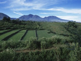 Rice Paddies  Flores Island  Indonesia  Southeast Asia