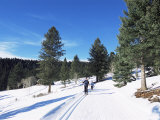 Cross Country Skiing  Lone Mountain  Montana  Western Area  Yellowstone  USA