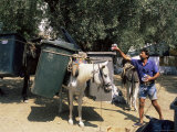 Mule Used for Collecting Rubbish  Island of Trikeri  Pelion  Greece